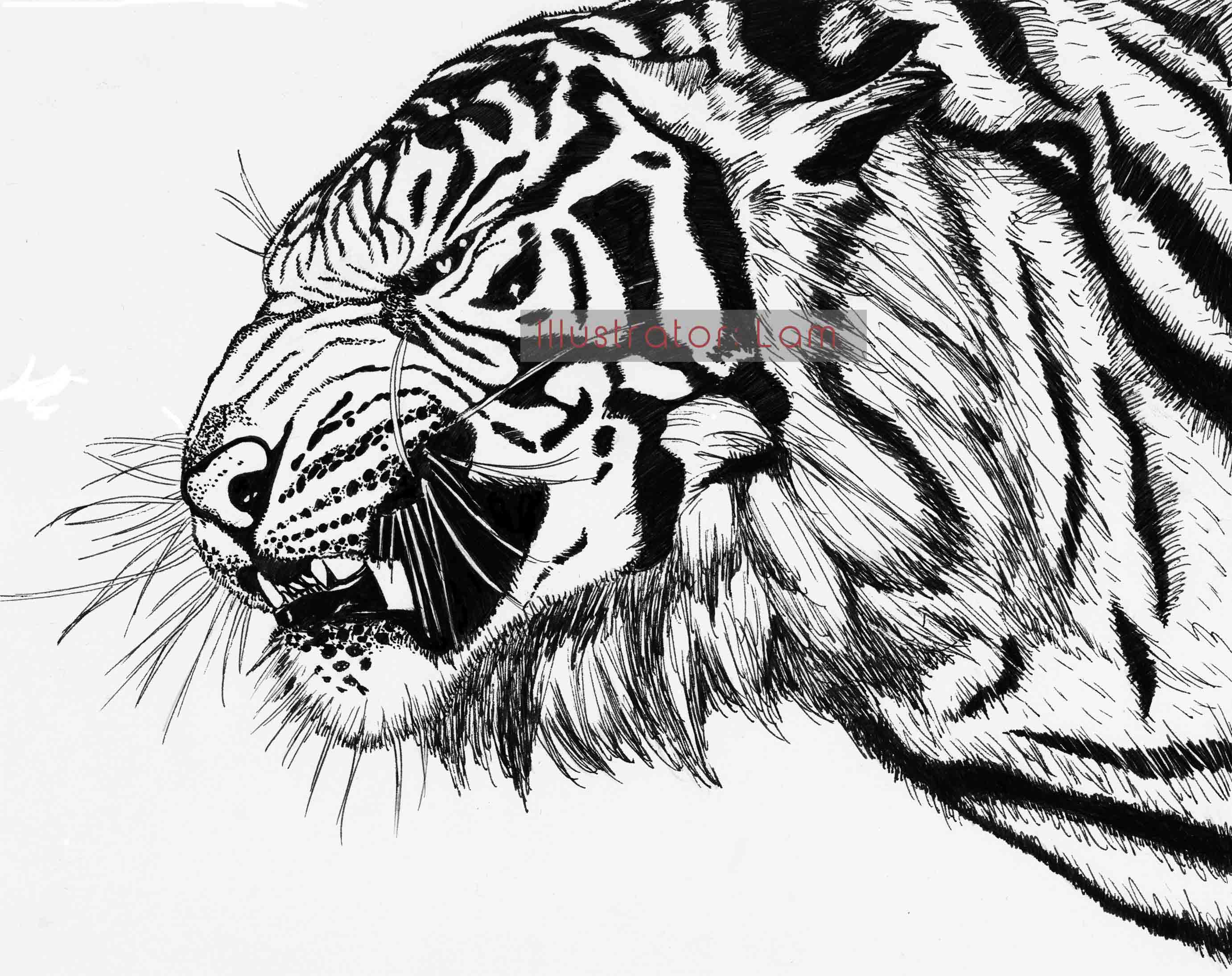 Line Art Tiger : Chinese tiger line drawing
